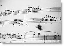 Sheetmusic_fly